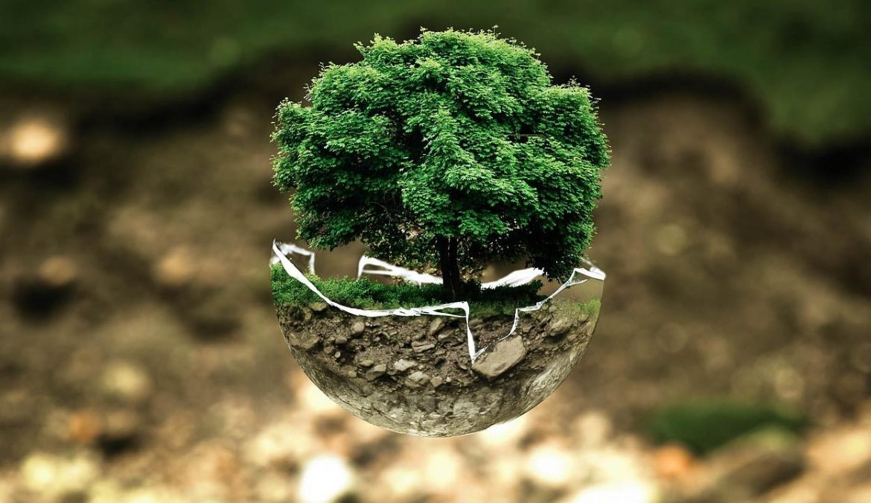 …das letzte Kapitel Baumschutzsatzung!?